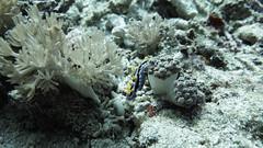G16_160918 00107 2 (puikincz) Tags: bali nusapendia underwater diving secretgarden
