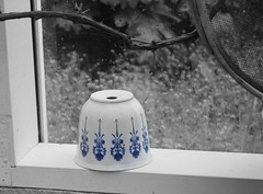 Blue China (gfacegrace) Tags: pot potplant plantpot flower flowerpot china blue patter art artistic photoart arty unusual interesting window magic fairytale shed garden gardenshed frame outdoor pretty beautiful canon sad sadness spring lonely blackandwhite simple simplicity