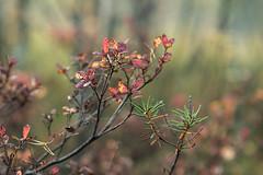 Autumn (Sami Farin) Tags: nikon nikkor d3300 nikkor85mmf18 rawtherapee tampere nature autumn 85mmf18g