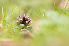 Photo of Nestled Cone