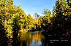 Half Dome (RedHatGal: Barbara Butler/FireCreek Photography) Tags: halfdome yosemite nationalpark mercedriver reflection pinetrees mountain drought deadtrees outdoorlandscape forest barbarabutlerphotography firecreekphotography redhatgal