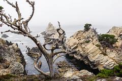 Point Lobos, October 2016 #3 (satoshikom) Tags: canoneos60d canonef1635mmf28liiusm pointlobosstatenaturalreserve californiastateparks californiacoast weekend allanmemorialgrove