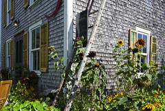 The boutique at the Chocolaterie (Natimages) Tags: chocolate building backyard chocolaterie kamouraska qubec places tourism architecture oldhouse flowers latesummer pentaxk5 da1650