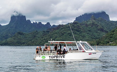 Diving boat and Balihai at Tahiti Moorea Cookbay (sapphire_rouge) Tags: frenchpolynesia    beach moorea  resort  reef society francehpolynesia coral societyislands  boat tahiti polynesia water island underwater diving bali balihai atoll
