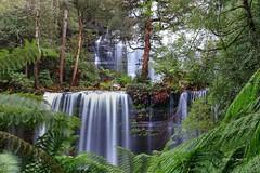 R U S S E L L  ~  F A L L S (Mark B. Imagery ) Tags: tasmania australia geotagged photography flickr waterfall stream landscape terrain russellfalls mountfieldnationalpark