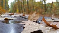 Liście (maciey24) Tags: liście leaves trees drzewa tree drzewo park ławka bench alley autumn fall jesień krople drops water woda kolory kolorowo kolorowe color colors colour colours colorful strzelnica wolności pabianice