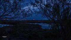 Bien planque ! (Tra Te E Me (TTEM)) Tags: lumixfz1000 photoshop cameraraw hrault heurebleue paysage nature villeneuvelesmaguelones palavas tang vgtation crpuscule