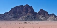Wadi Rum # 1 (schreibtnix) Tags: reisen travelling jordanien jordan landschaft landscape wste desert wadirum felsen rocks strukturen structures karawane cameltrain tiere animals kamel camel himmel sky blau blue olympuse5 schreibtnix
