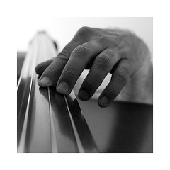 8-contrabass (Roberto Gramignoli) Tags: blackandwite bw hand hands contrabbasso contrabass play suonare musica music jazz instruments musicinstruments strumentimusicali