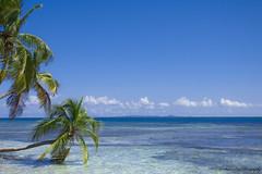 Palominito Island (Sharon Enid Photography) Tags: beach puertorico photography palmtrees photo island palominito palominitoisland fajardo elconquistador hilton hiltonhotel ocean sea coast caribbean visitpuertorico sephotography