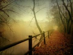 IMG_2317 a path in the mist (pinktigger) Tags: autumn path oasideiquadris fagagna feagne friiuli italy italia leaves fence water pond fog