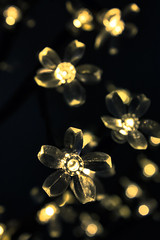 Fairy lights (gina.nicole.tesloff) Tags: fairy lights christmas sparkle bright contrast yellow gold black flower white enchanting england efflorescence exposure reflection romantic texture tiny tradition uk pattern pretty petal perspective artistic detail delicate dark design depth glow hanging light canon view beautiful macro cafe