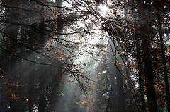 20161030-WOL_7726.jpg (viennalinux) Tags: spaziergang nebel herbst nature tauern fog natur ossiach ossiacher