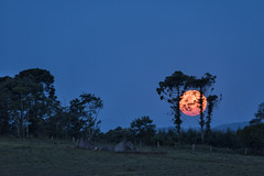 "BRU9734o (Tomas Brugger) Tags: supermoon moon superlua ""nikonflickraward"""