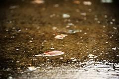Fall Rain (niKonJunKy22) Tags: fall autumn leaf leaves foliage concrete cement patio weather rain gloomy sad dark dof water drop color colors brown art dream float nature outside outdoors america explore explored