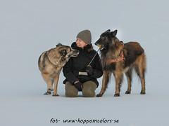 20160311091684 (koppomcolors) Tags: koppomcolors dog dogs hund hundar