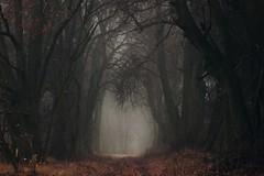 November Day (nettisrb) Tags: waldweg wald wood forrest weg path bume tree trees allee natur naturerlebnis nature lane herbst autumn fall germany deutschland nebel licht light landscape landschaft mood