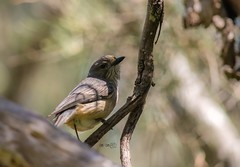 (erdcocyx95) Tags: beautifulbird wildlifephotography wildlife nature birdphotography birdphoto birdlover birds