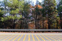 Troodos Geopark (41) (Polis Poliviou) Tags: polispoliviou polis poliviou   cyprus cyprustheallyearroundisland cyprusinyourheart yearroundisland zypern republicofcyprus  cipro  chypre   chipir chipre  kipras ciprus cypr  cypern kypr  sayprus kypros polispoliviou2016 troodosgeopark troodos mediterranean nicosia valley life nature forest historical park trekking hiking winter walking pine pines prodromos limassol paphos fall autumn geopark kakopetria