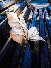 Autumn pics (cosminme) Tags: nature park day colors photography photo craiova romania rays sun autumn bench leaf
