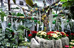 Christmas Flower Show, Allan Gardens Conservatory, Toronto, ON (Snuffy) Tags: christmasflowershow christmas allangardens toronto ontario canada level1photographyforrecreation