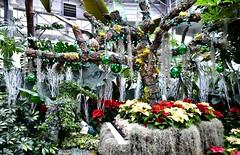 Christmas Flower Show, Allan Gardens Conservatory, Toronto, ON (Snuffy) Tags: christmasflowershow christmas allangardens toronto ontario canada level1photographyforrecreation niceasitgetslevel1
