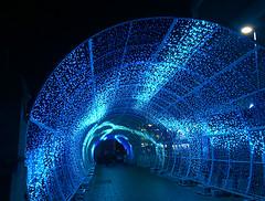 Norwich Christmas 2016 (mira66) Tags: norwich christmas xmas lights tunnel 2016 haymarket norfolk england