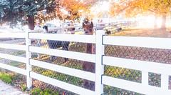 Peaking Alpaca (VBuckley.com) Tags: fence whitefence whitefencefarm buckleyfence fall autumn outdoor illinois chicagoland midwest sunset leaves yellowleaves pettingzoo alpaca peaking suspicious funny