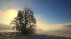 Misty morning .. (buidl-lemmy) Tags: mist fog nebel morgen morning blue blau baum tree shadows schatten frost sonne sun calden