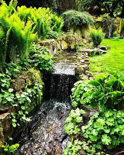 Chartwell waterfalls #chartwell #kent #winstonchurchill #nationaltrust #waterfall #waterfalls #water #stream #garden