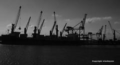 Progress (WISEBUYS21) Tags: docks dock millenium baltic sage tyne quay tynebridge milleniumbridge newcastleupontyne quayside guildhall rivertyne     tynerivercruise wisebuys21 newcastleuntited nykassuru    nyukasl