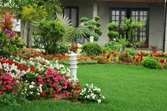 Tarefas a realizar no jardim no ms agosto: dicas e sugestes (utilidades_casa) Tags: plantas exterior jardim legumes rega horta sugestes dicas tarefas jardinagem