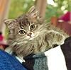 00378 (d_fust) Tags: cat kitten gato katze 猫 macska gatto fust kedi 貓 anak katt gatito kissa kätzchen gattino kucing 小貓 고양이 katje кот γάτα γατάκι แมว yavrusu 仔猫 का skorpi बिल्ली बच्चा