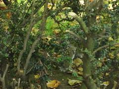 Cannon Hill Park - squirrel (ell brown) Tags: greatbritain autumn trees england tree leaves birmingham squirrel unitedkingdom westmidlands moseley cannonhillpark edgbaston pershorerd edgbastonrd