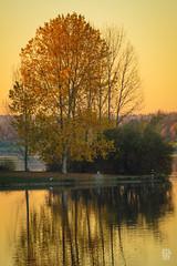 2015-11-01_Q8B4022 © Sylvain Collet.jpg (sylvain.collet) Tags: autumn france nature automne sur marne vairessurmarne vaires
