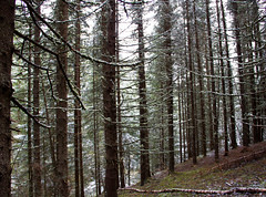 Scandinavian forests (Olga NS) Tags: trees nature norway norge bosque noruega forests