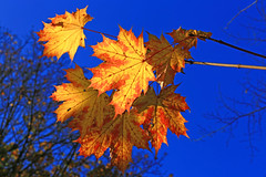 Colors Of Nature (ISO 69) Tags: herbst