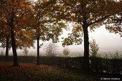 2015-10 Genieten van het Geuldal bij mist (Mechelen) (About Pixels) Tags: 1023 2015 collecties herfstseizoen limburg mechelen mechelerhof meteo mist mnd10 natuur nederland oktober trees fogg weather boom
