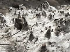 Peaks (Thren09) Tags: wood oregon log gray weathered photostream 2015