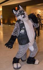 DSC_0018 (Acrufox) Tags: chicago illinois furry midwest december ohare rosemont convention hyatt regency 2014 fursuit furfest fursuiting acrufox mff2014