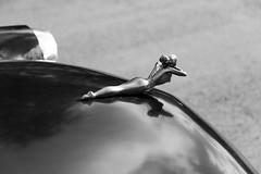 Emblme sur capot de voiture amricaine (michel.driencourt) Tags: cuba voiture capot viales amricaine emblme voitureamricaine