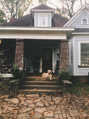 333/365 {Explored 12/1/2015} (moke076) Tags: park old atlanta dog pet house oneaday animal rock mobile stone yard georgia mutt mix flickr grant south guard cellphone cell explore porch photoaday resting 365 bungalow guarding iphone 2015 project365 explored 365project vsco vscocam
