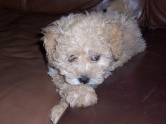 oh-so-cute--chesney-is-one-of-kenzie-and-chewys-f1b-girls_4697989369_o