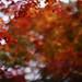 Palette of autumn