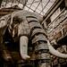 IMG_9585-1-4, Le Grand Eléphant, The Elephant