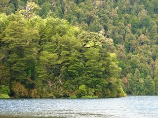 Lago pirihueico,puerto fuy,region de los rios,Chile