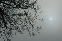 Looking at the sun (bertrandwaridel) Tags: autumn nature fog switzerland december suisse vaud 2015 echallens échallens