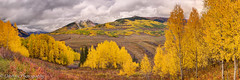 Storm's Comin' (OJeffrey Photography) Tags: colorado coloradorockymountains fallcolors golden gold aspentrees aspen ojeffreyphotography ojeffrey jeffowens nikon d800 panorama pano