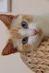 Casper (Nick Fewings 4.5 Million Views) Tags: fur face blue eyes pet cat