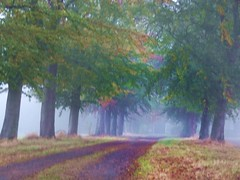 2016-10-21 brume (28)alle (april-mo) Tags: fog mist mistymorning brume arbres trees autumn villerscampeau wood